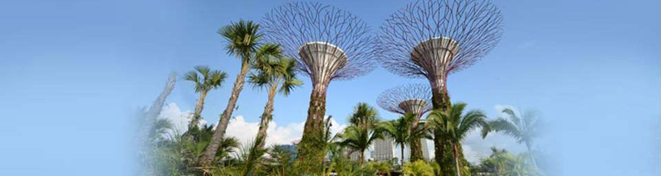 View of supertrees at Gardens by the Bay, 27/06/2012