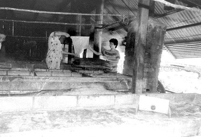 Bean curd processing at Lorong Halus, Tampines area